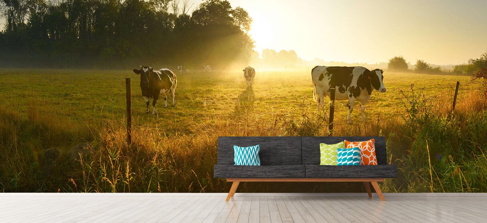 Dieren Koe tijdens zonsopkomst 12