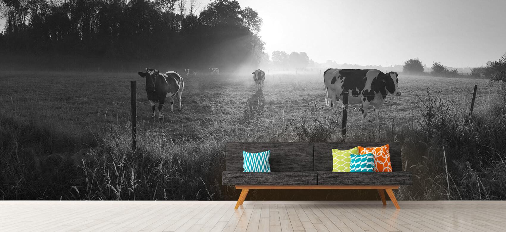 Dieren Koe tijdens zonsopkomst 13