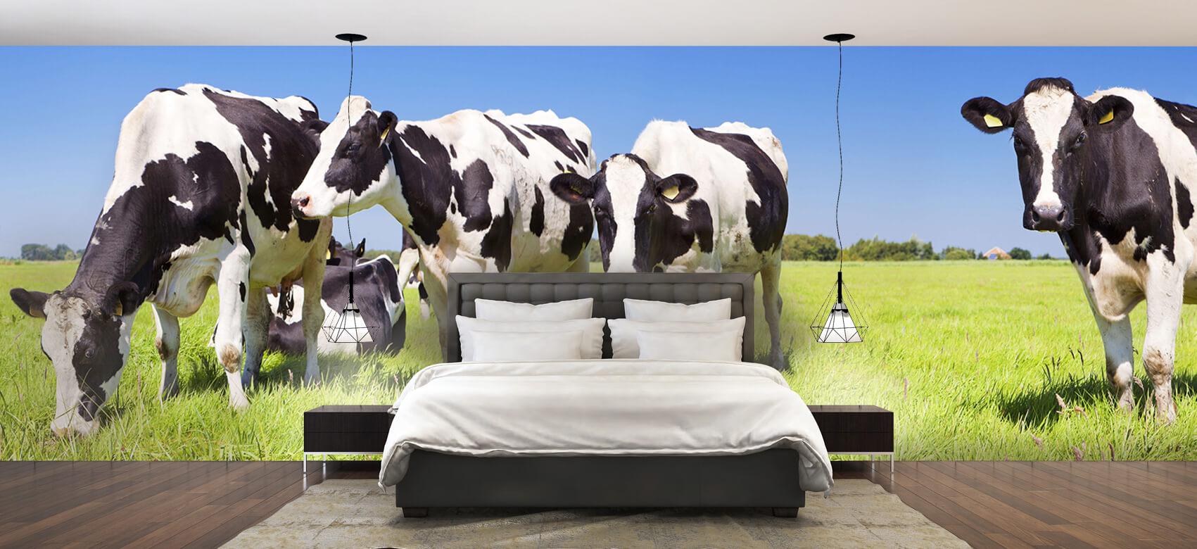 Dieren Fotobehang koeien 1