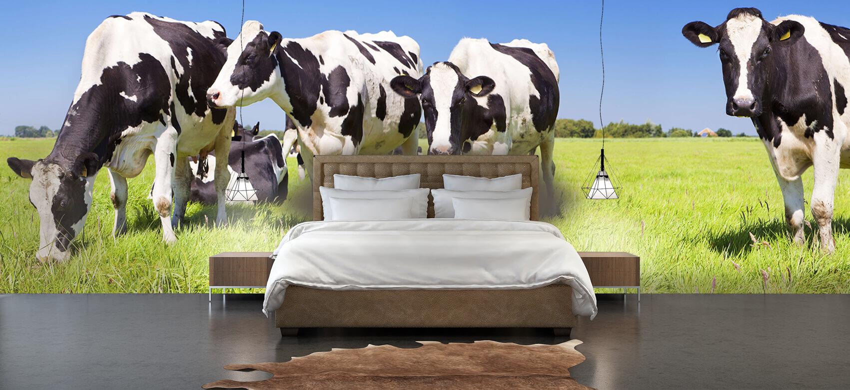 Dieren Fotobehang koeien 3