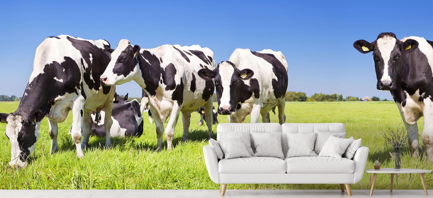 Dieren Fotobehang koeien 5