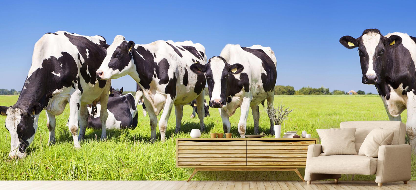 Dieren Fotobehang koeien 6