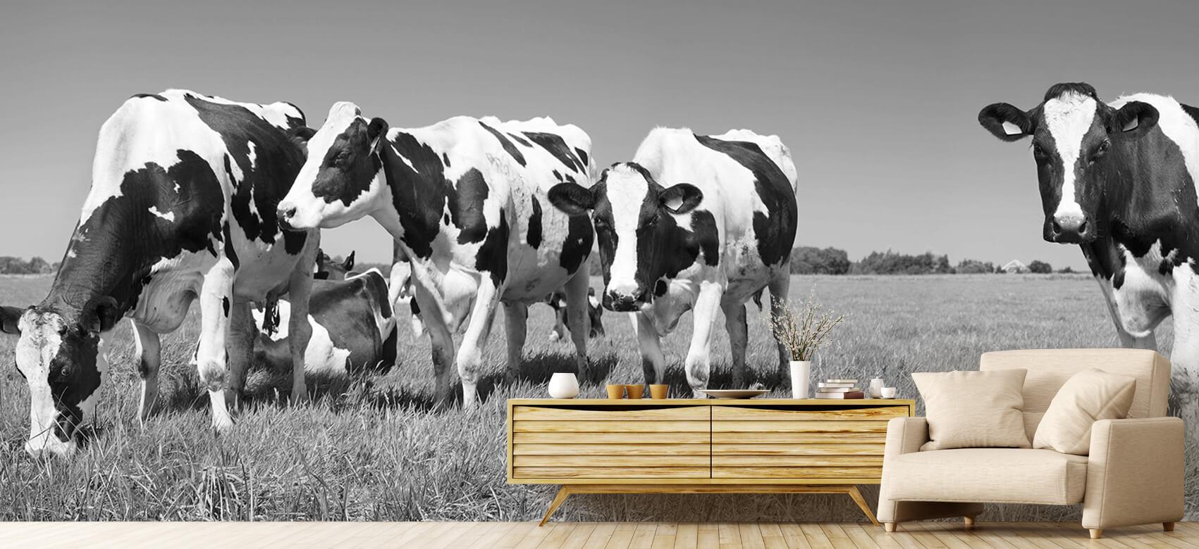 Dieren Fotobehang koeien 7