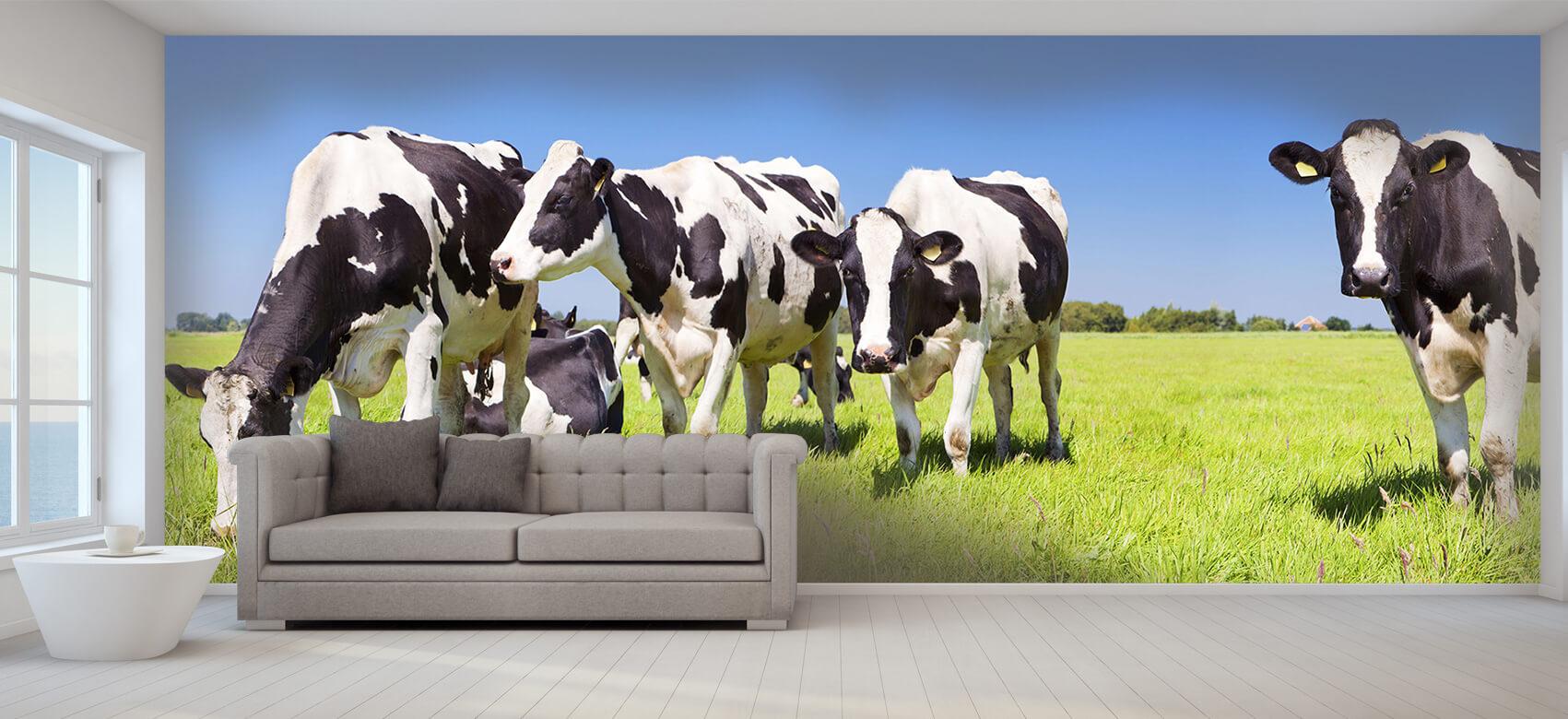 Dieren Fotobehang koeien 8