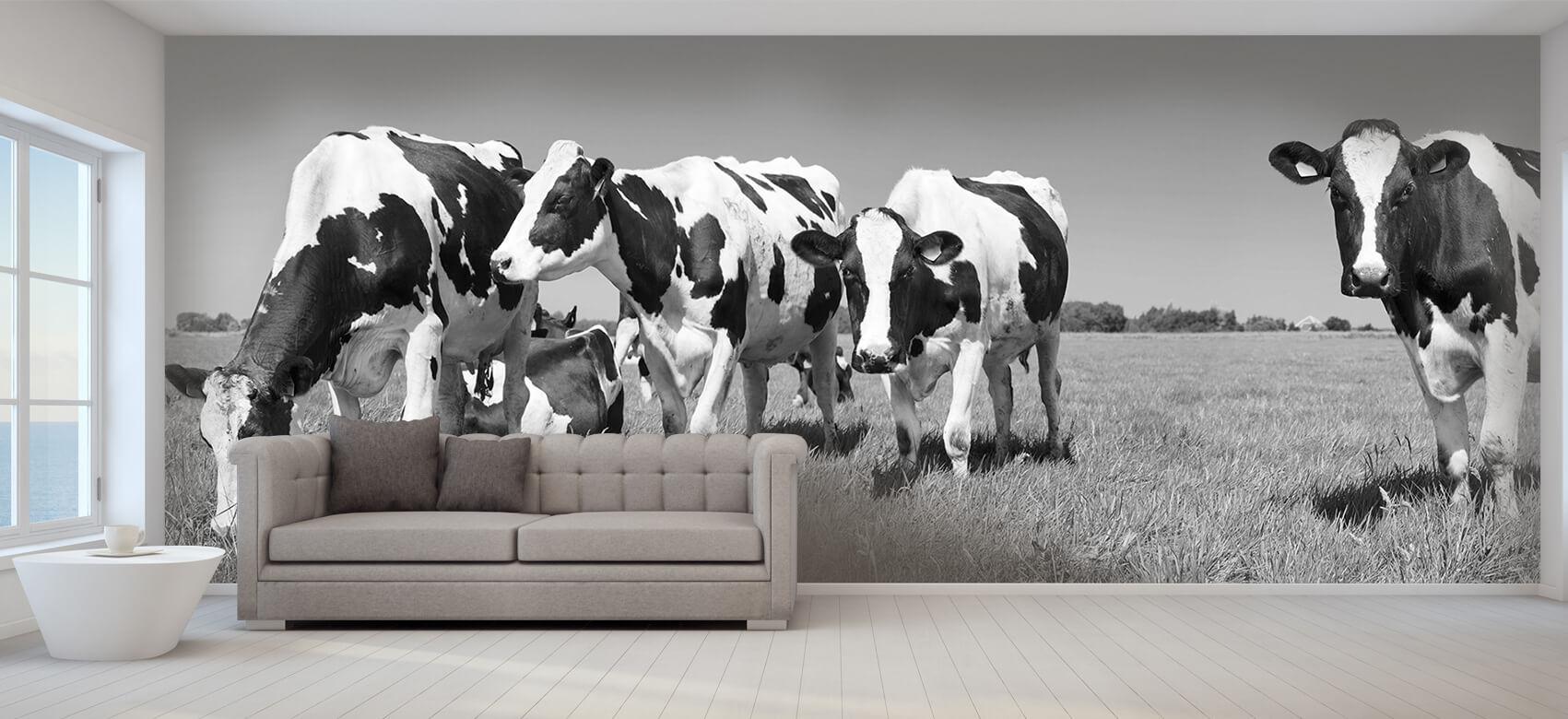 Dieren Fotobehang koeien 9