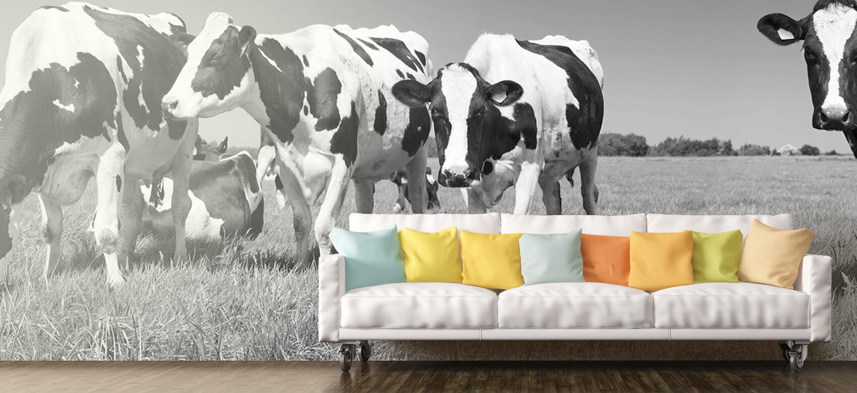 Dieren Fotobehang koeien 11
