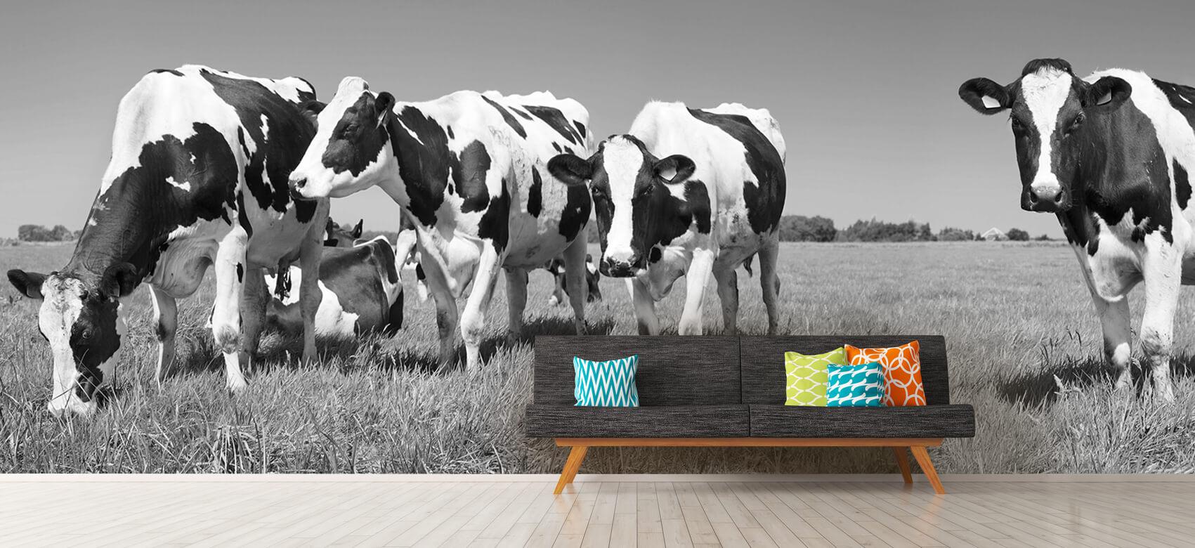 Dieren Fotobehang koeien 13