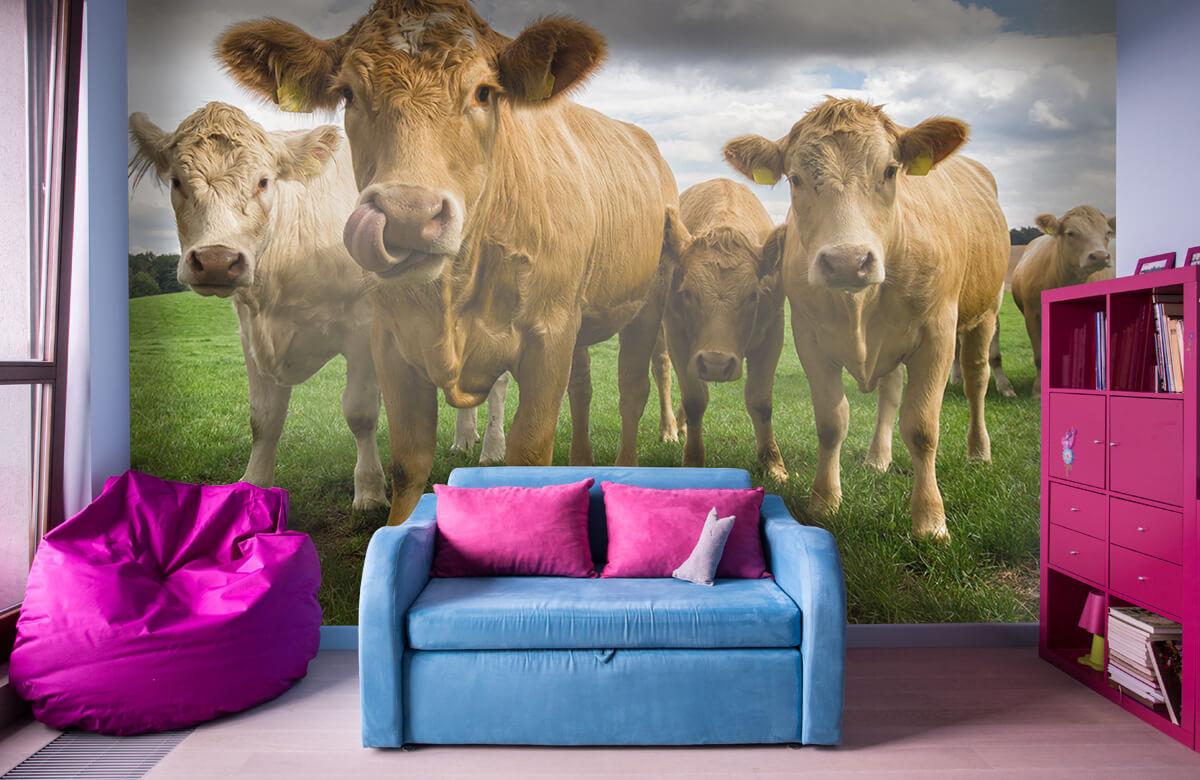 Dieren Bruine koeien 10