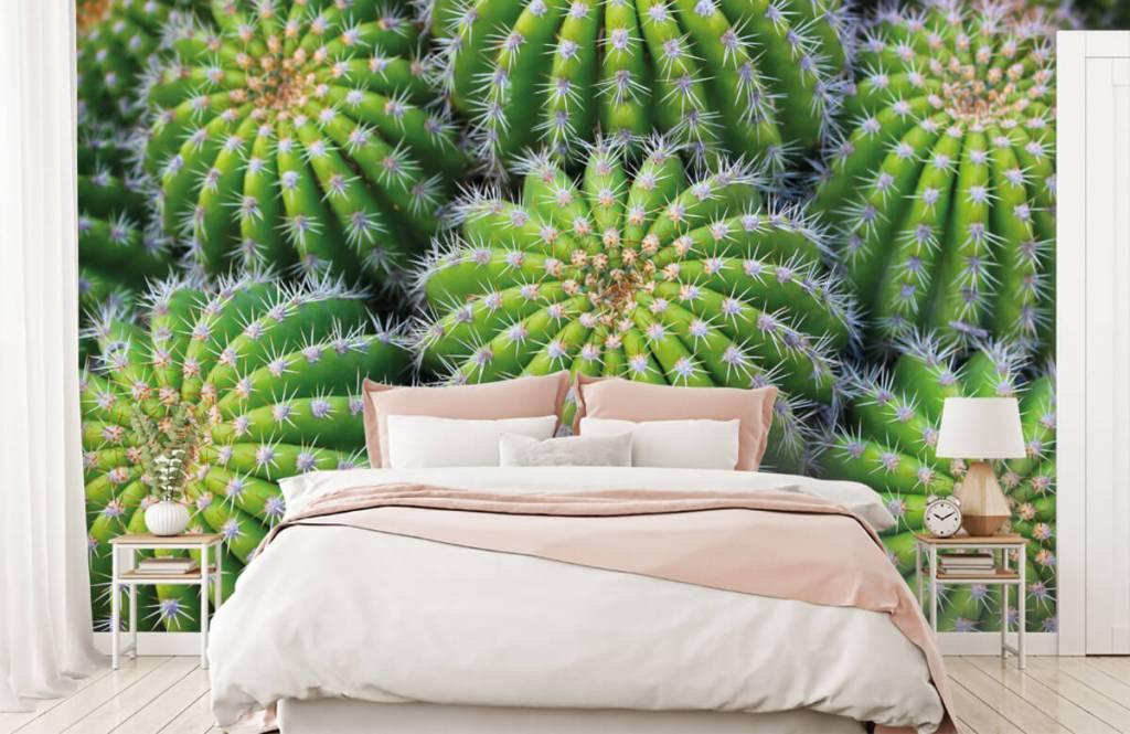 Cactussen - Cactussen - Tienerkamer 1