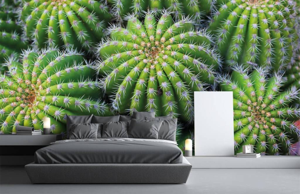 Cactussen - Cactussen - Tienerkamer 2