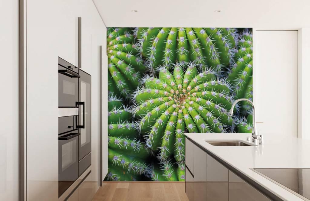 Cactussen - Cactussen - Tienerkamer 3