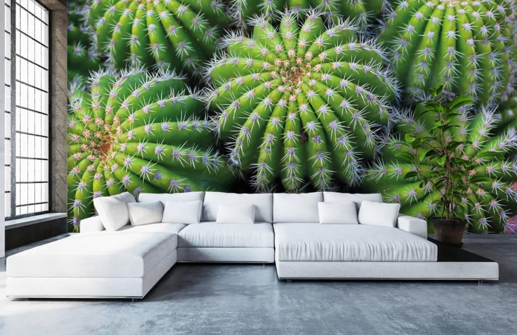 Cactussen - Cactussen - Tienerkamer 5