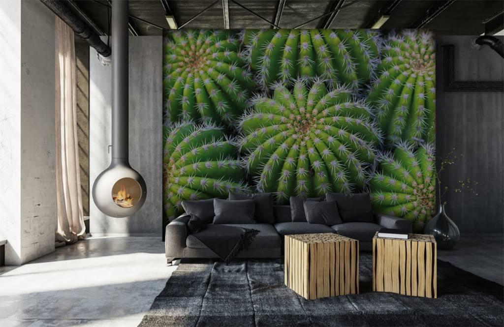 Cactussen - Cactussen - Tienerkamer 6