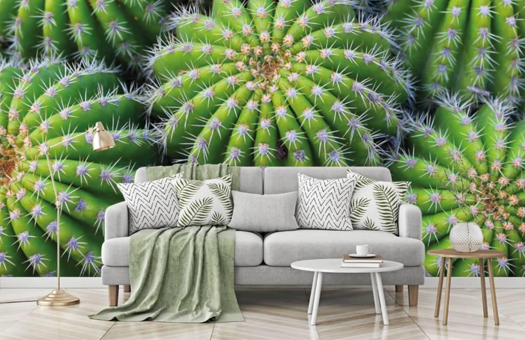 Cactussen - Cactussen - Tienerkamer 7