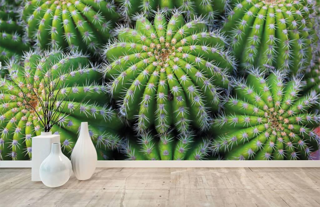 Cactussen - Cactussen - Tienerkamer 8