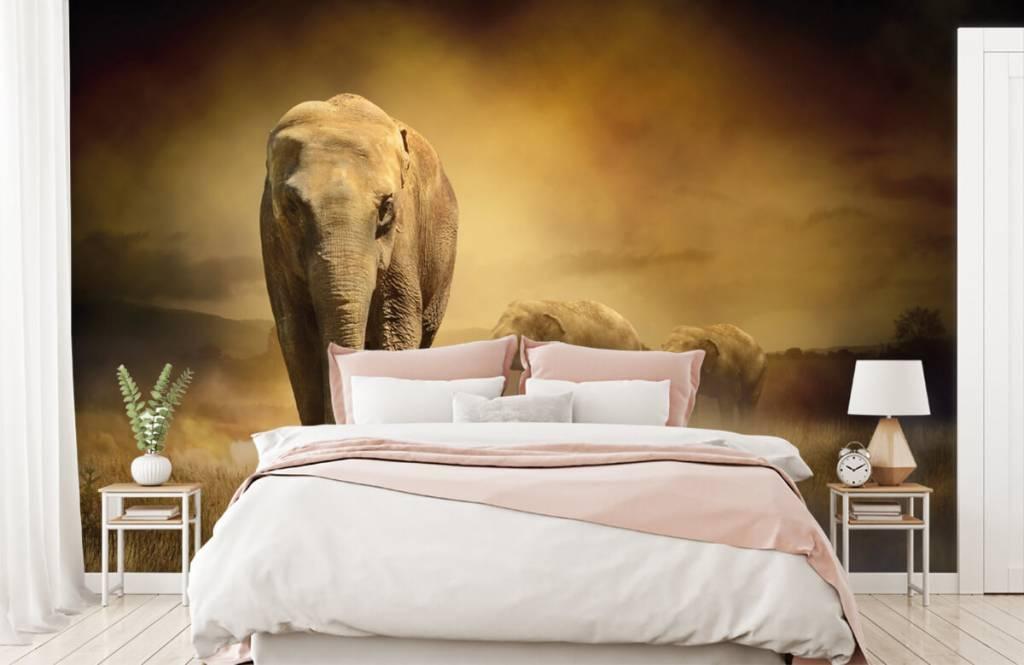 Dieren - Drie olifanten - Tienerkamer 2