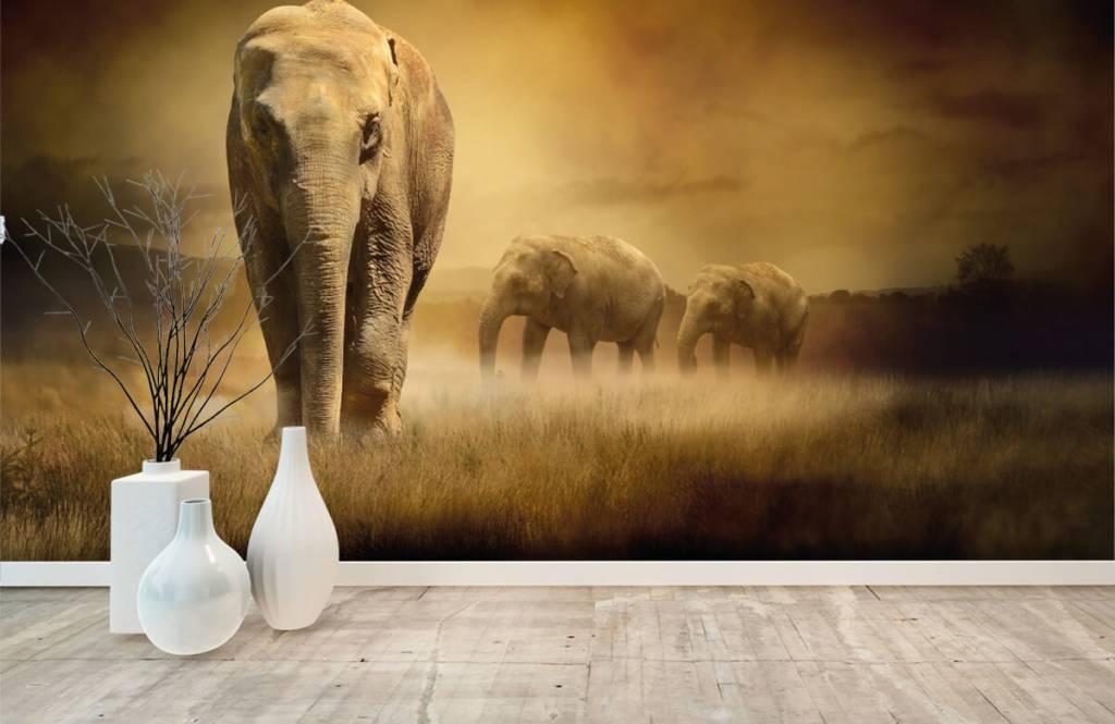 Dieren - Drie olifanten - Tienerkamer 3