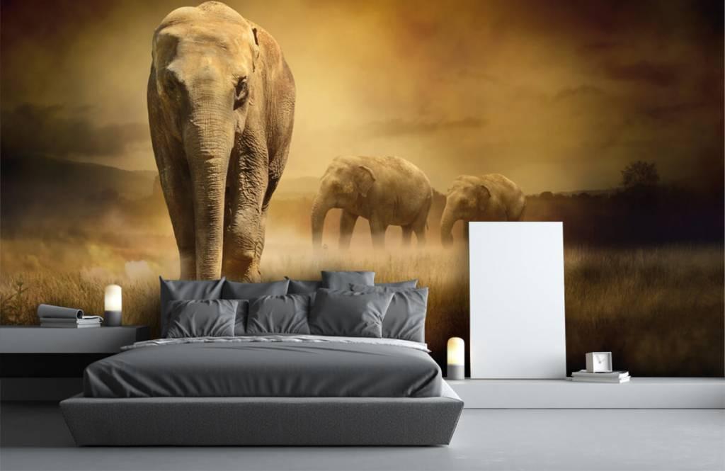 Dieren - Drie olifanten - Tienerkamer 4