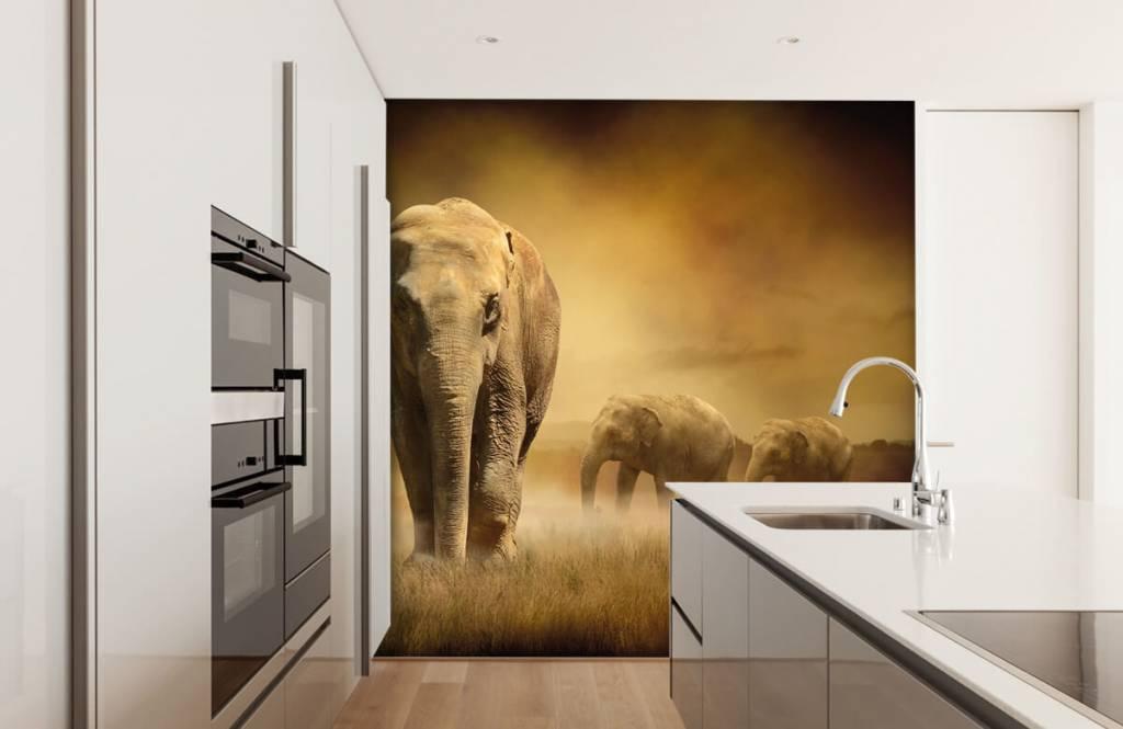 Dieren - Drie olifanten - Tienerkamer 5
