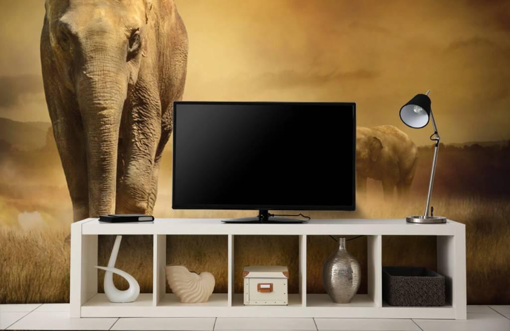 Dieren - Drie olifanten - Tienerkamer 6