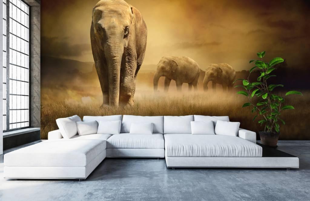 Dieren - Drie olifanten - Tienerkamer 7