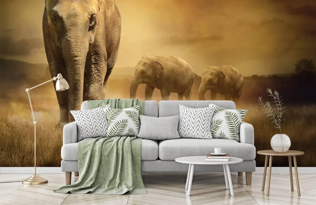 Dieren - Drie olifanten - Tienerkamer 8