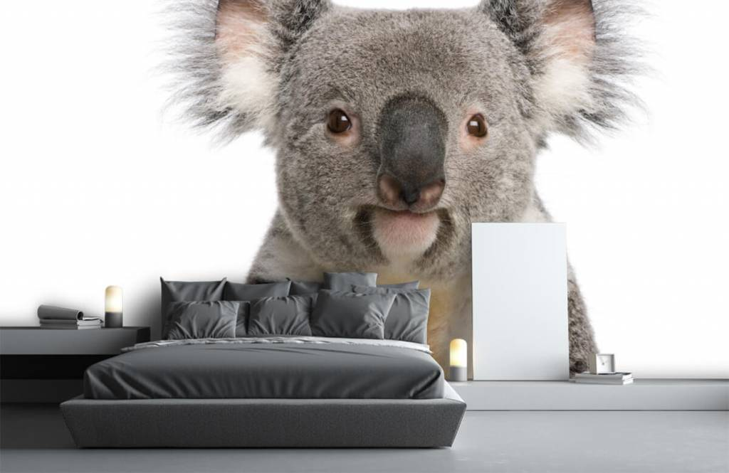 Overige - Foto van een koala - Kinderkamer 1