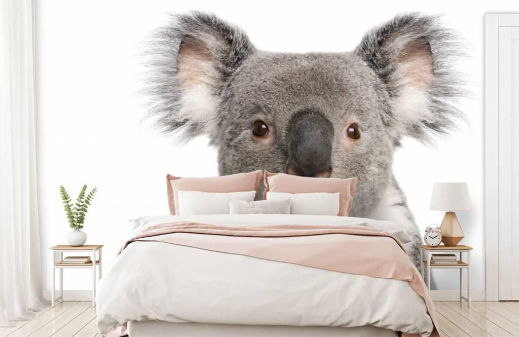 Overige - Foto van een koala - Kinderkamer 2