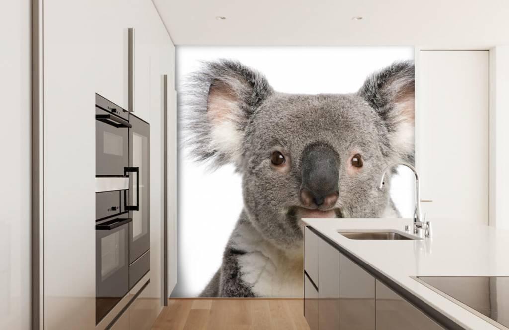 Overige - Foto van een koala - Kinderkamer 3