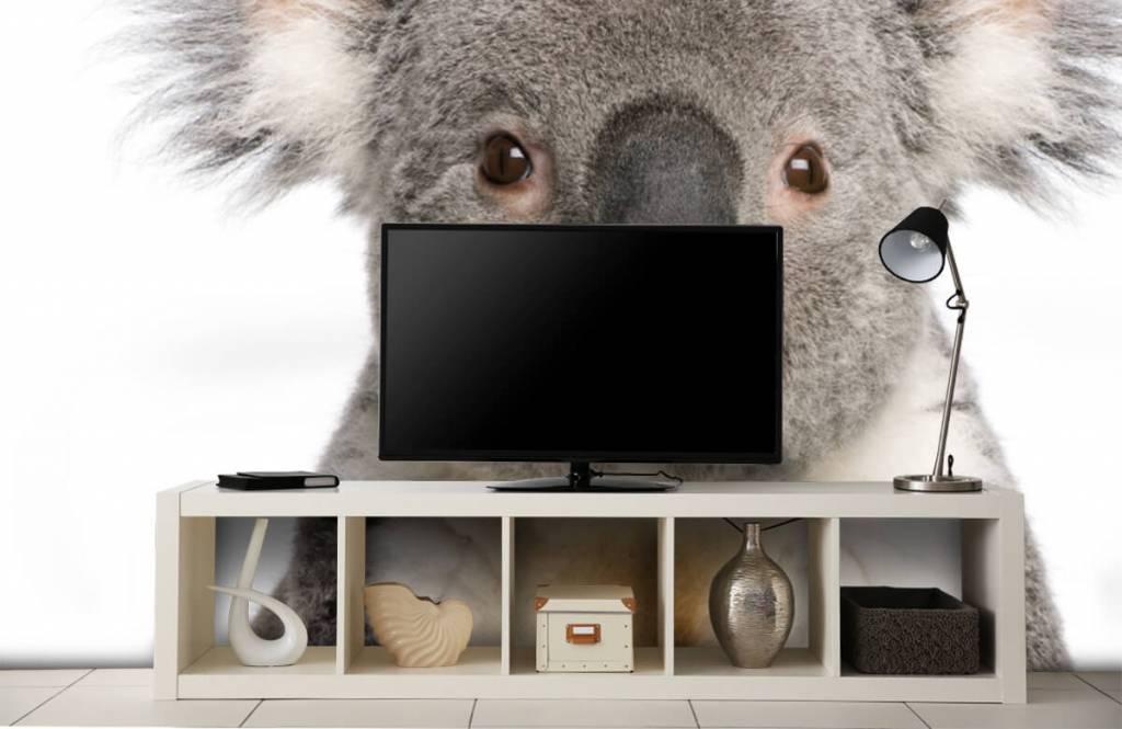 Overige - Foto van een koala - Kinderkamer 4