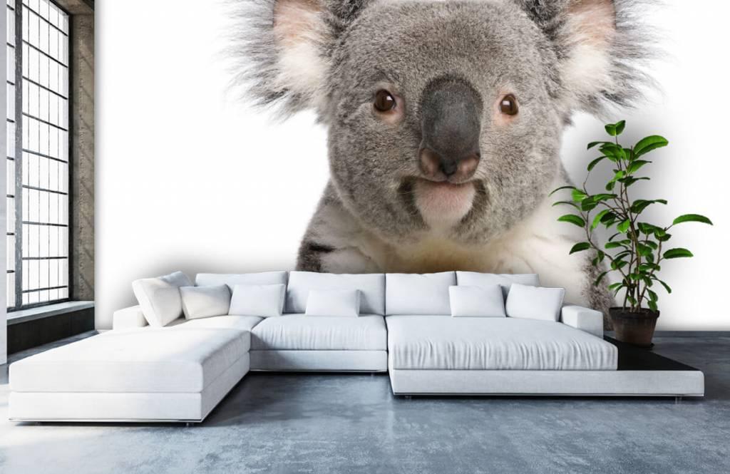 Overige - Foto van een koala - Kinderkamer 5