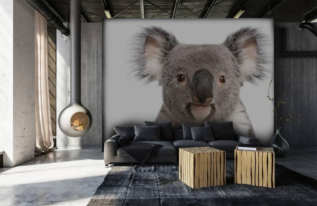 Overige - Foto van een koala - Kinderkamer 6