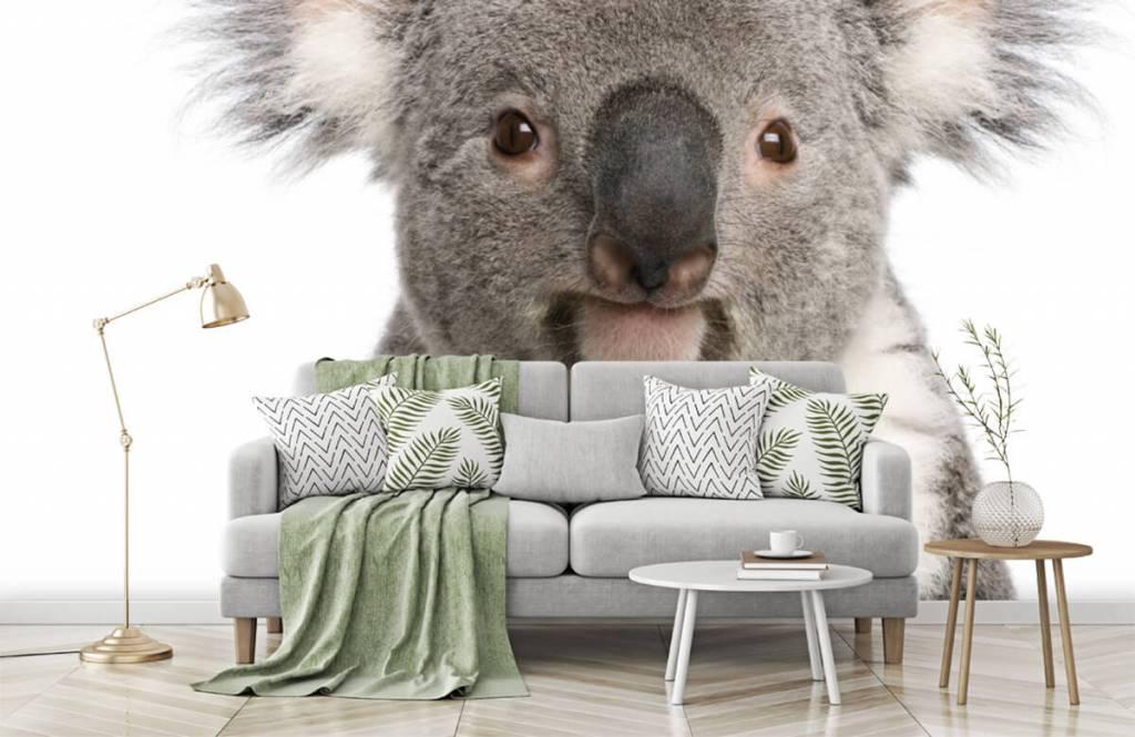 Overige - Foto van een koala - Kinderkamer 7