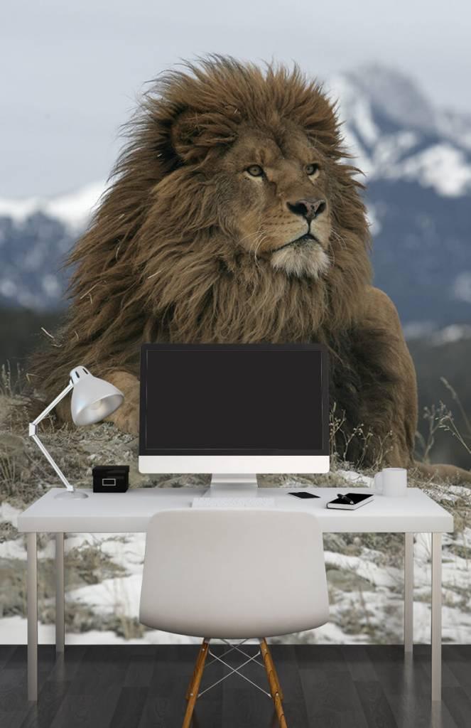 Tijgers & Leeuwen - Barbarijse leeuw - Tienerkamer 1