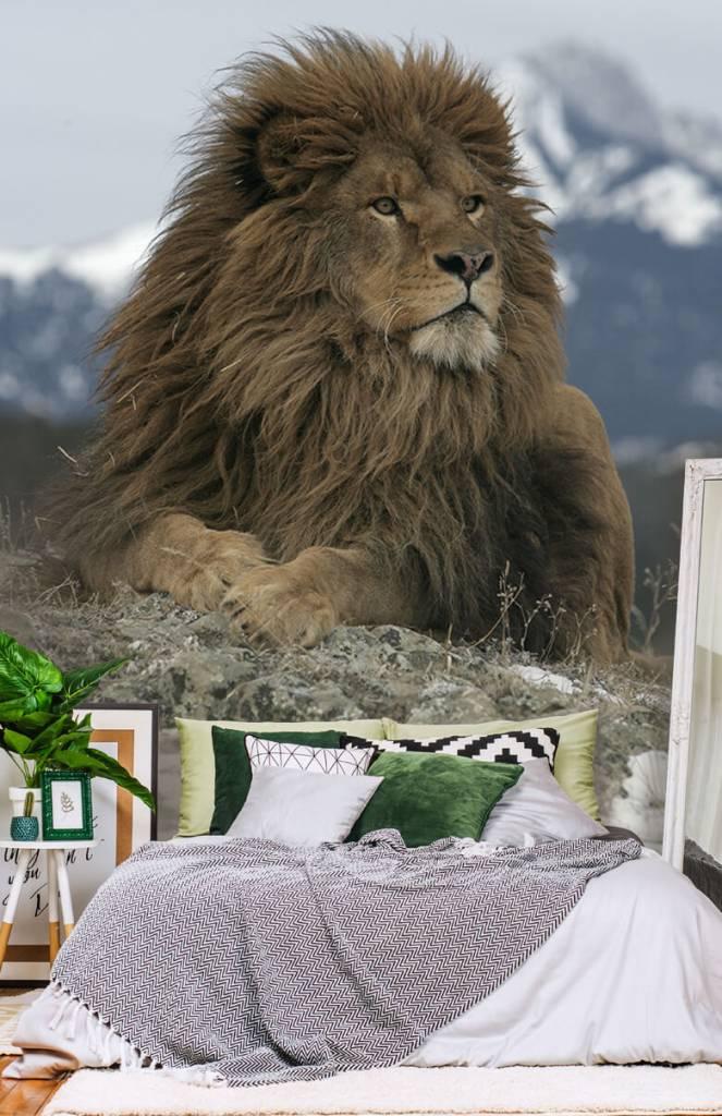 Tijgers & Leeuwen - Barbarijse leeuw - Tienerkamer 2