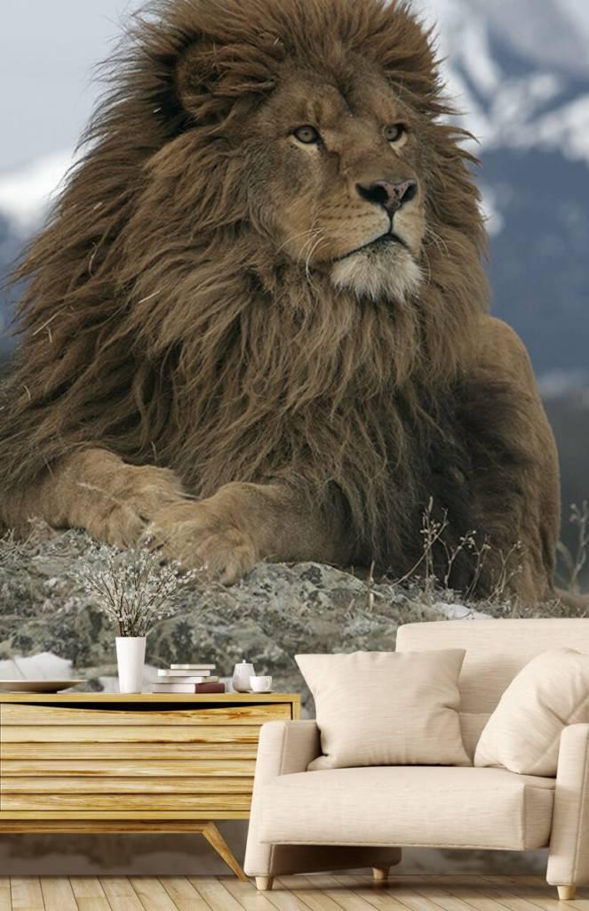 Tijgers & Leeuwen - Barbarijse leeuw - Tienerkamer 3