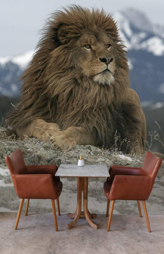 Tijgers & Leeuwen - Barbarijse leeuw - Tienerkamer 4
