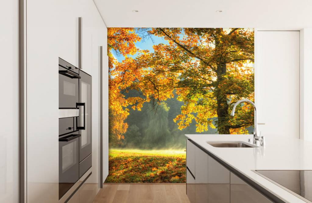 Bos behang - Boom in herfstkleuren - Slaapkamer 1