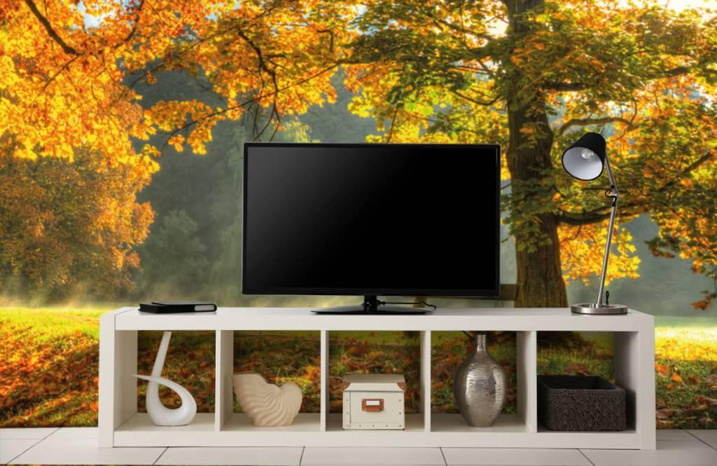 Bos behang - Boom in herfstkleuren - Slaapkamer 2