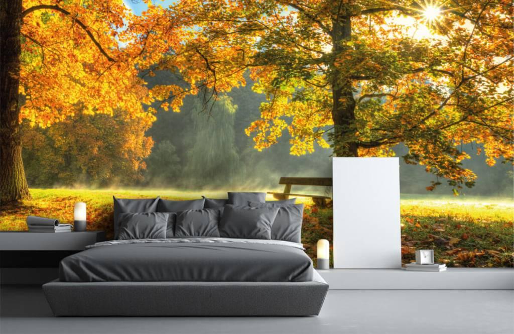 Bos behang - Boom in herfstkleuren - Slaapkamer 3