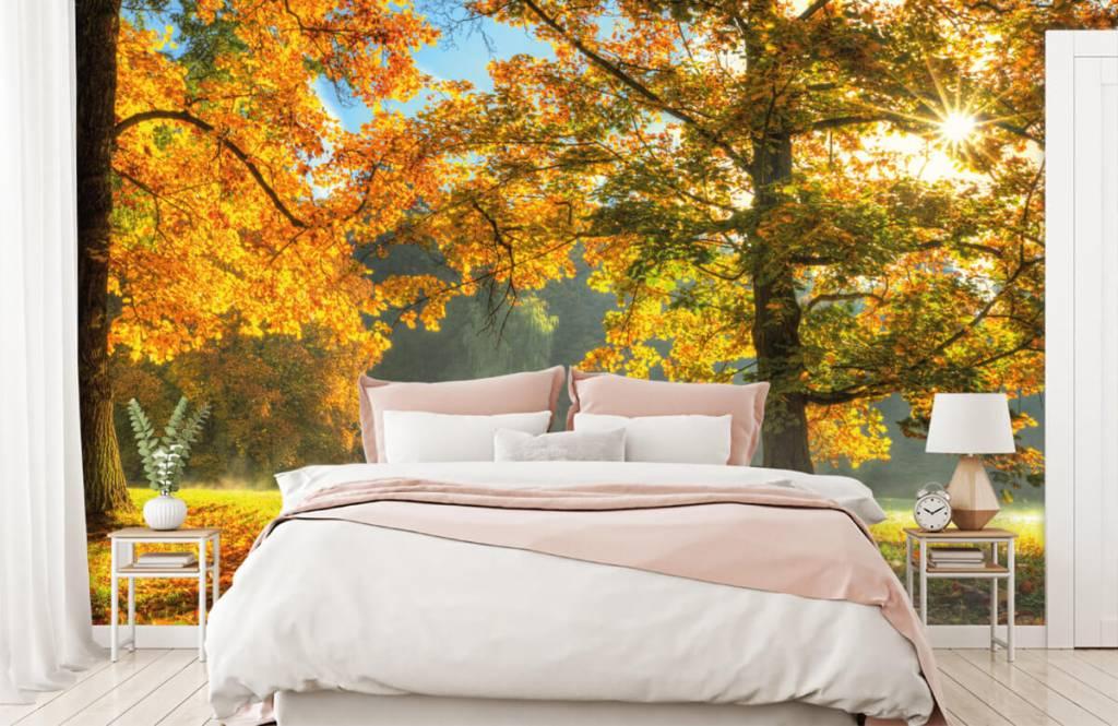 Bos behang - Boom in herfstkleuren - Slaapkamer 4