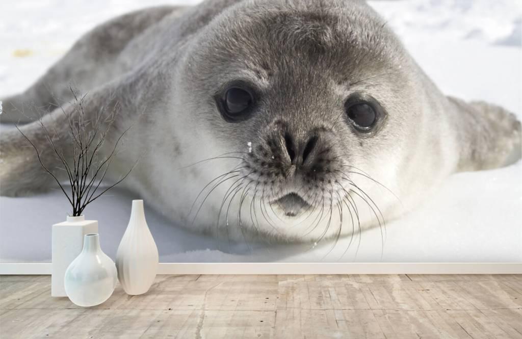 Peuter behang - Close-up van een zeehond - Kinderkamer 1