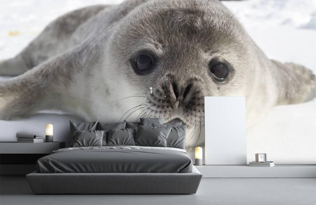 Peuter behang - Close-up van een zeehond - Kinderkamer 2
