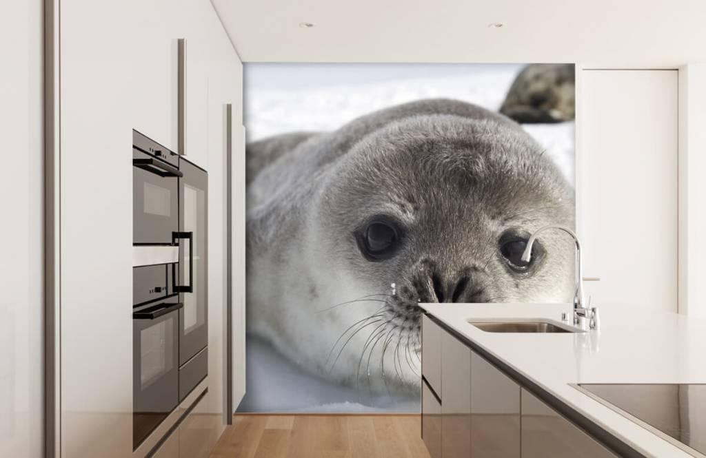 Peuter behang - Close-up van een zeehond - Kinderkamer 3