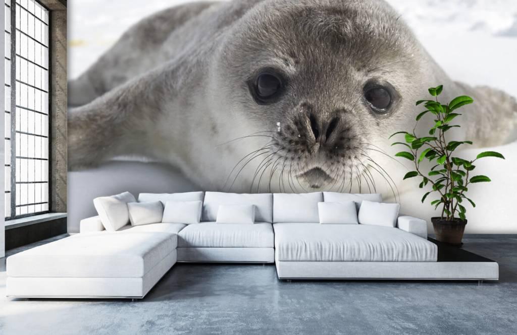 Peuter behang - Close-up van een zeehond - Kinderkamer 4
