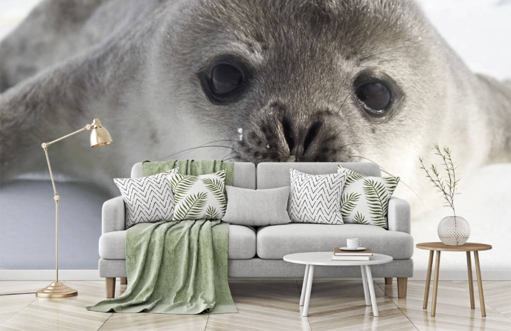 Peuter behang - Close-up van een zeehond - Kinderkamer 7