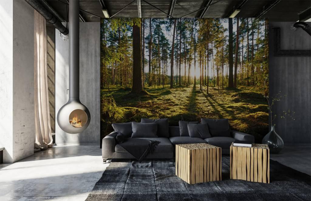 Bos behang - Dennenbos - Slaapkamer 6