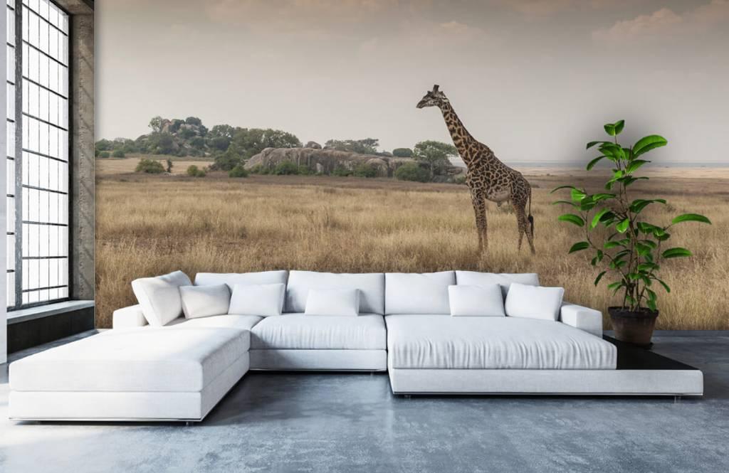 Dieren - Giraffe op een savanne - Slaapkamer 1