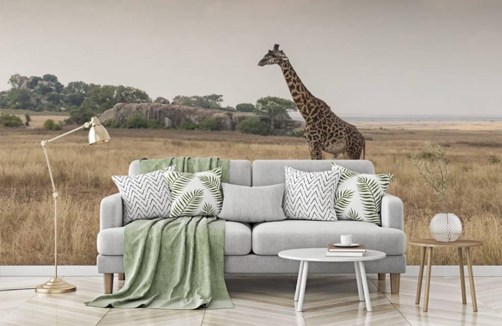 Dieren - Giraffe op een savanne - Slaapkamer 3