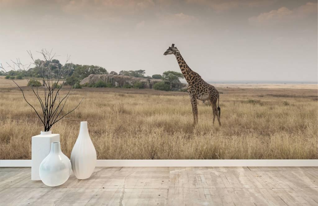 Dieren - Giraffe op een savanne - Slaapkamer 4
